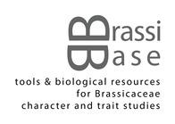 brassibase